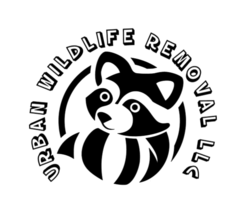 Urban Wildlife Removal MA