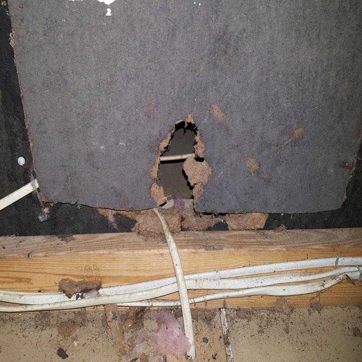 Repair Rat Damage