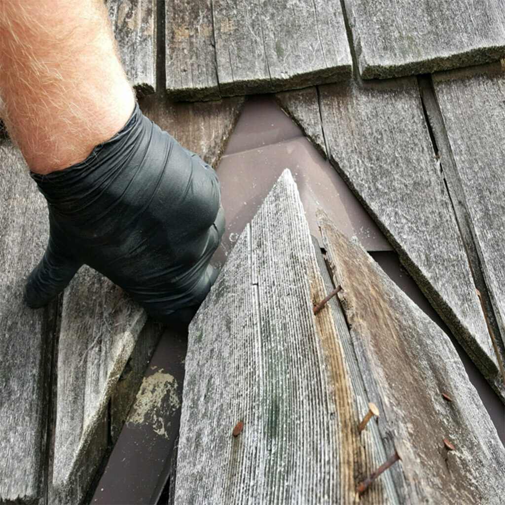 Wildlife Removal and Repairs